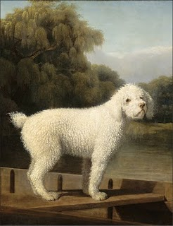 stubbs-white-poodle-in-a-punt